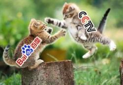 Baidu и CCTV