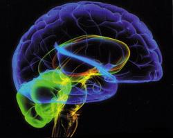 Великобритания, исследования, социальные сети, друзья,  особенности мозга