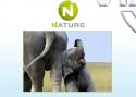 ZALA, новый канал, Viasat Nature, тестирование